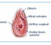 hymen et virginité